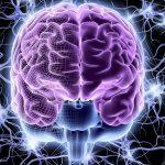Мозг человека хранит одинаковые воспоминания в обоих полушариях