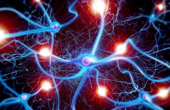 Ученые доказали, что две мозговые сети DMN  и DAT являются ключом к сознанию