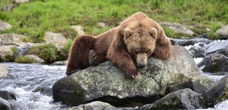 Выявлена потрясающая связь между ДНК медведя и языковыми группами человека