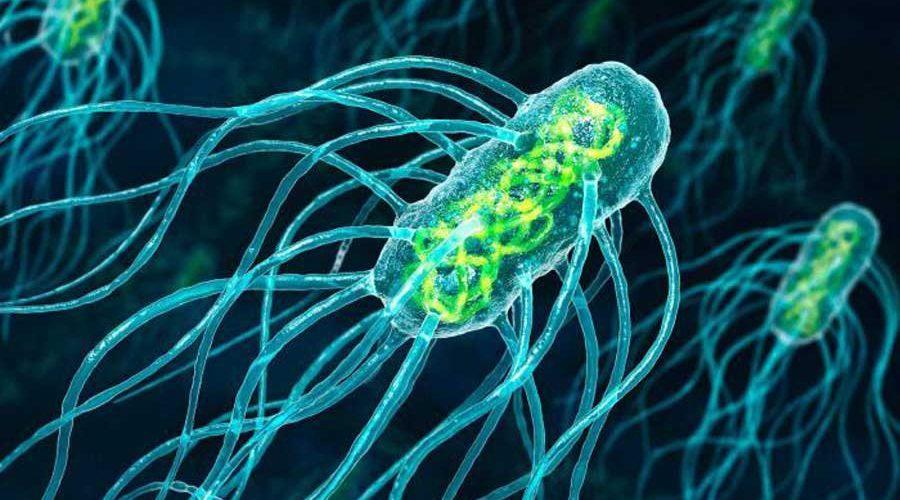 Микробы создают настоящую электрическую сеть в природе