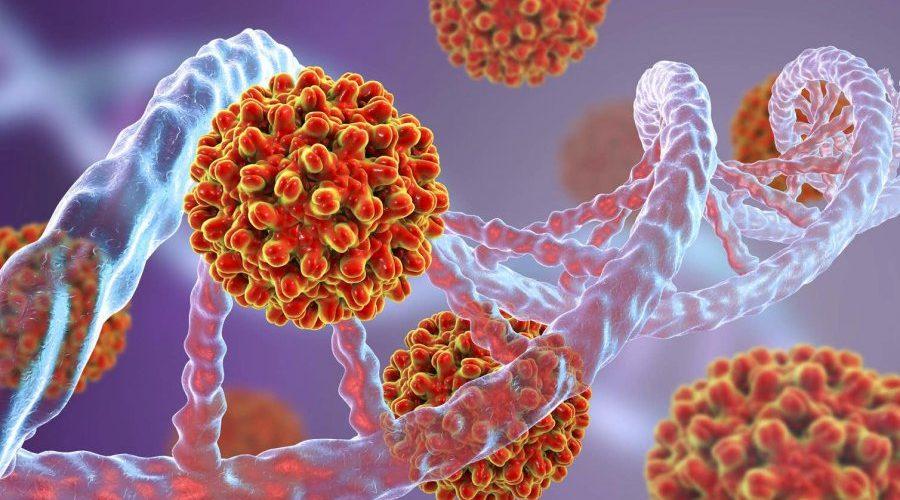 Ученые показали, что происходит, когда два вируса заражают одну и ту же клетку