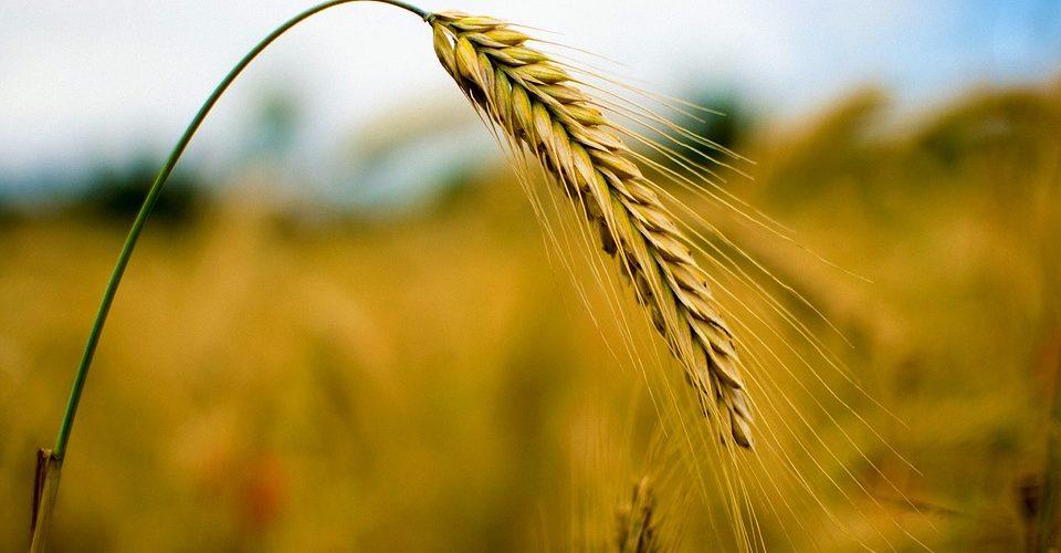 Ученые выяснили, как молекула SAP05 подчиняет растения своей воле