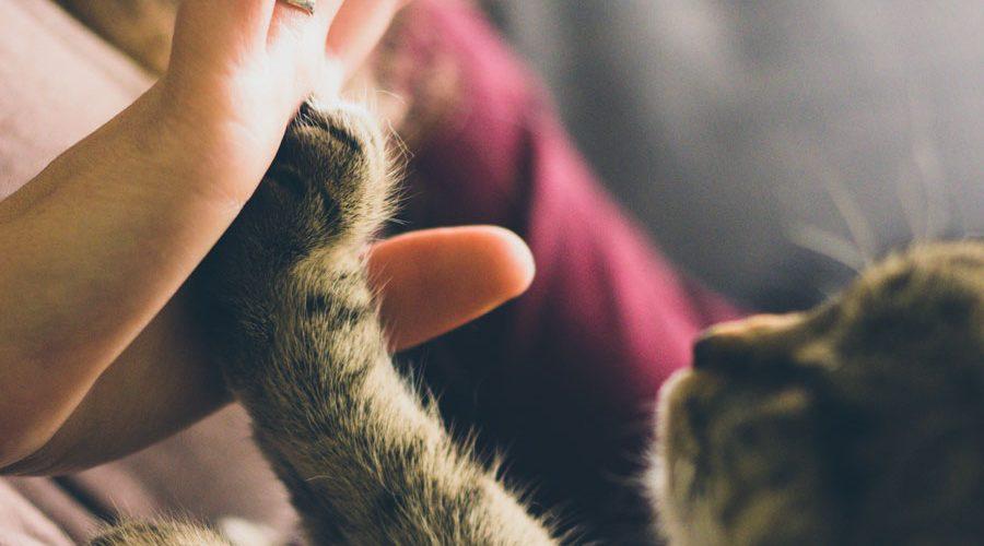 Бактерии, полученные от кошек, могут помочь в лечении инфекций