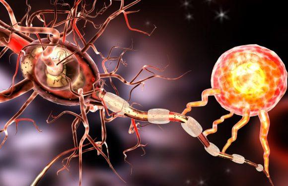 Генетические мутации могут быть не связаны с процессом старения